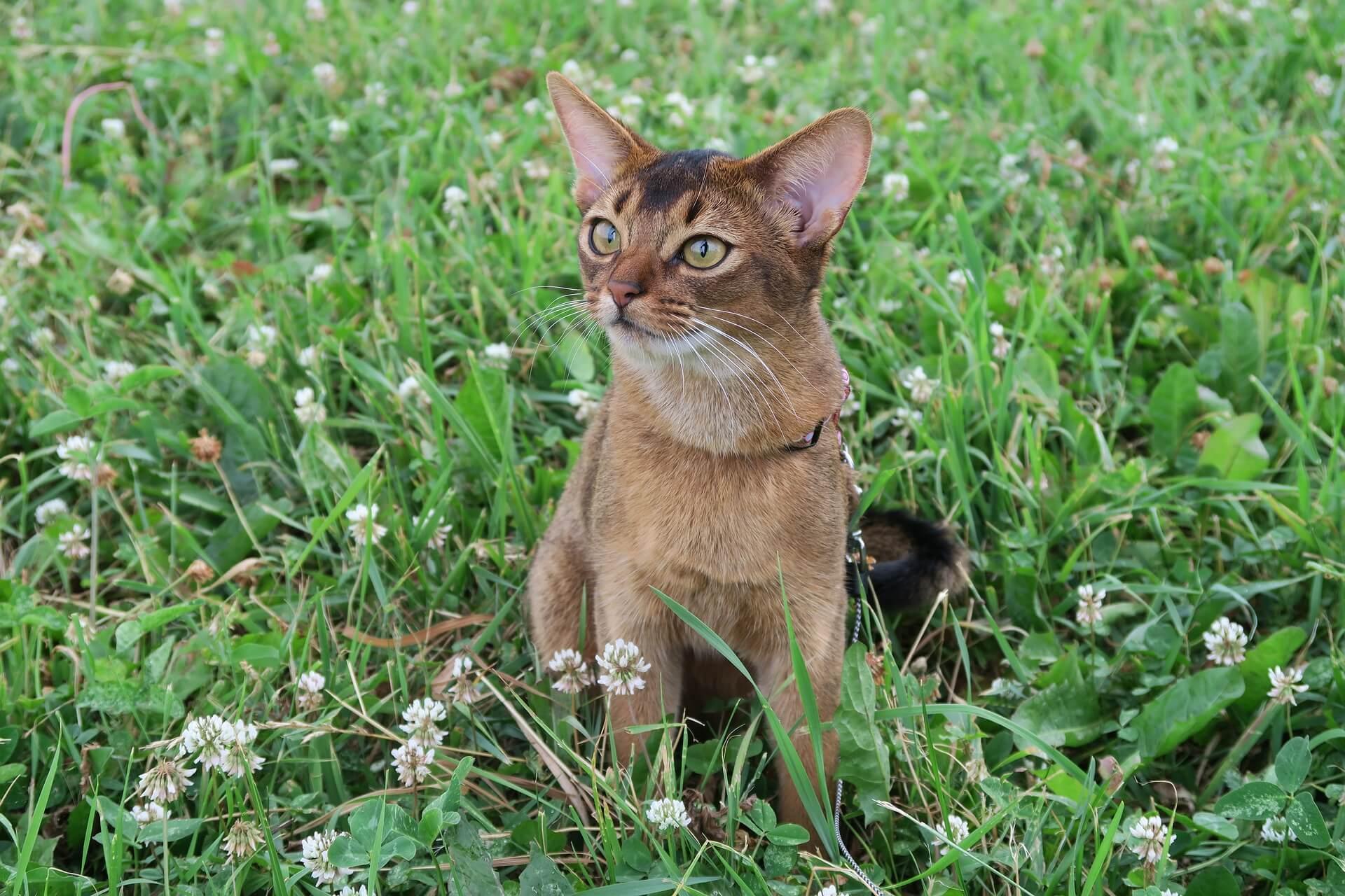 毛色 種類 猫